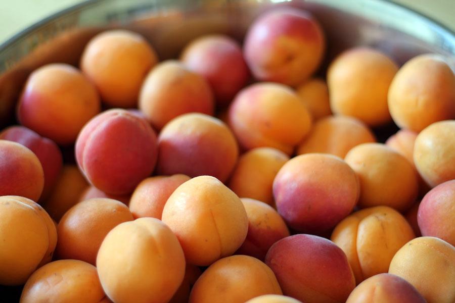 aprikosen marmelade selber machen