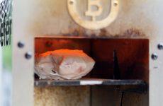 Hähnchenbrust-Sous-Vide-garen-und-beefen